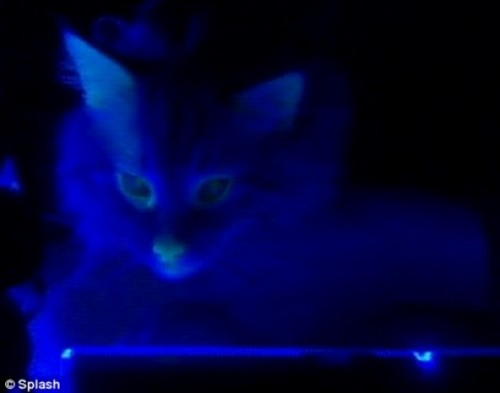 chat-phosphorescent.jpg