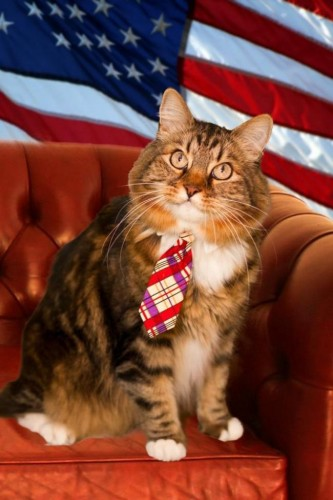 hank, chat ,candidat, sénateur, virginie, usa,